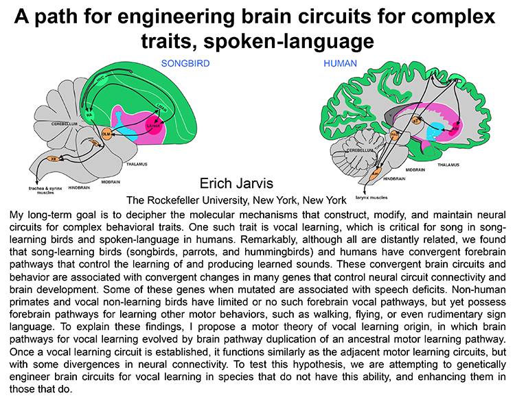 Plenary: A PATH FOR ENGINEERING BRAIN CIRCUITS FOR COMPLEX TRAITS, SPOKEN-LANGUAGE